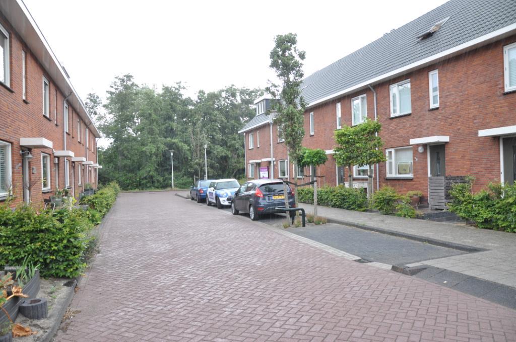 Piet van Damlaan
