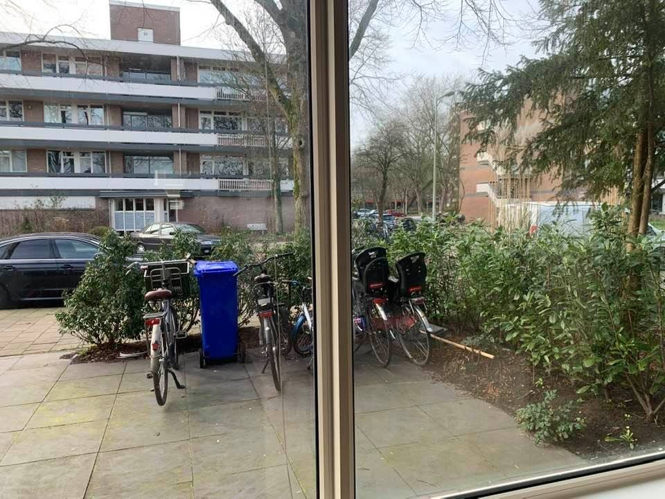 Bolestein, Amsterdam