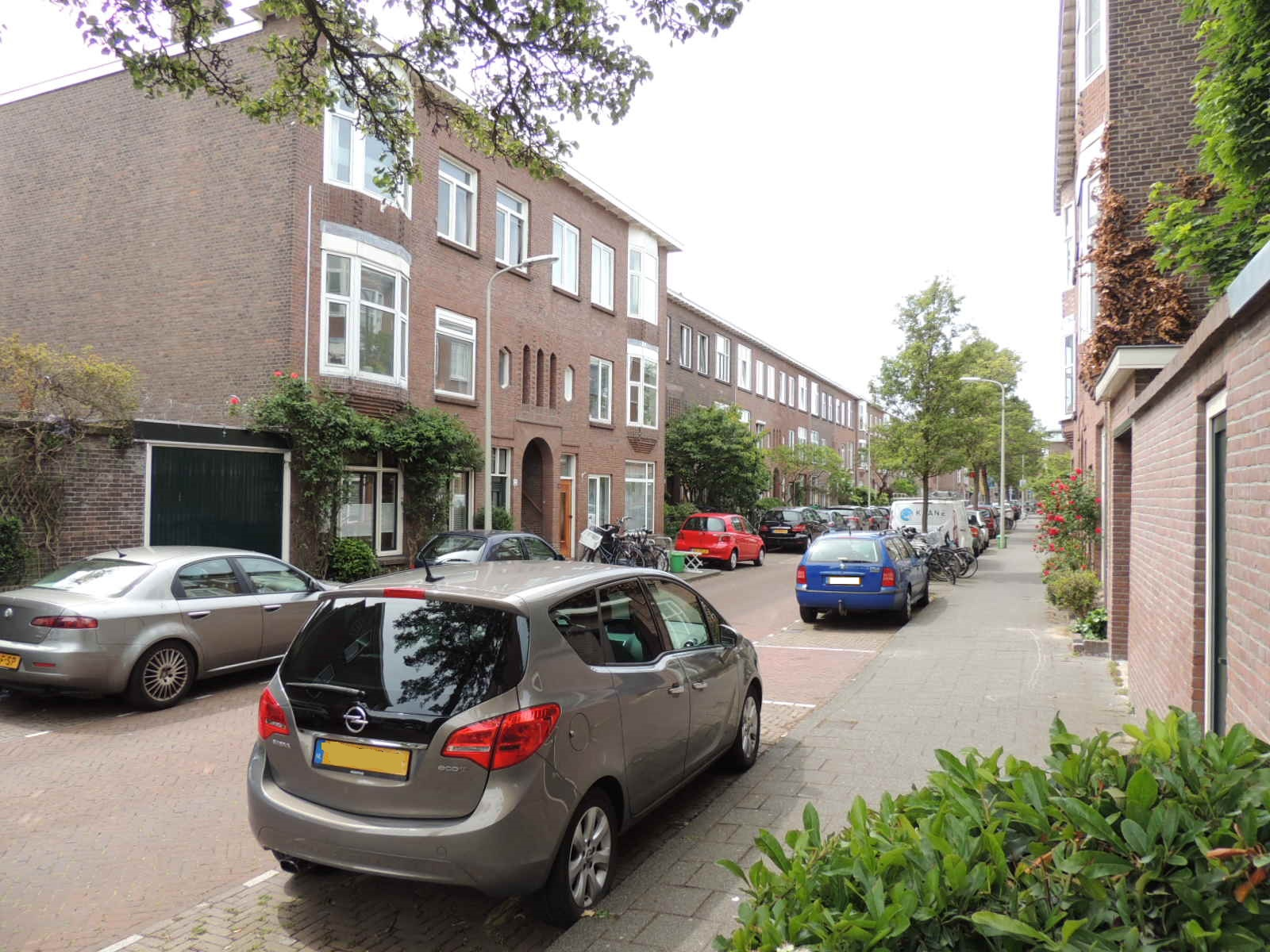 ligusterstraat, The Hague